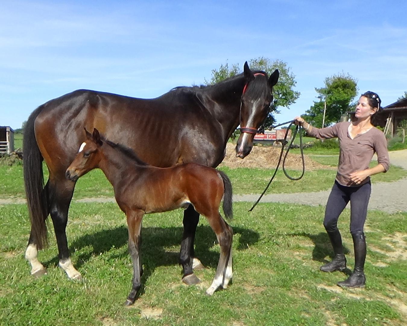 Economie acheter un cheval en copropri t une passion galopante dis leur - Acheter en copropriete ...