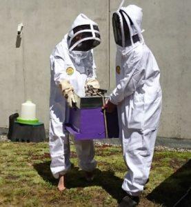 L'installation des ruches au Grand marché MIN de Toulouse