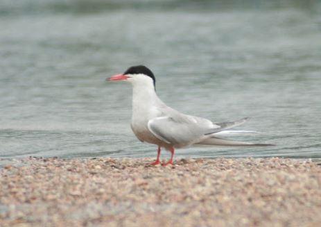 Nature / Oiseaux : Déconfinez, mais regardez où vous mettez les pieds