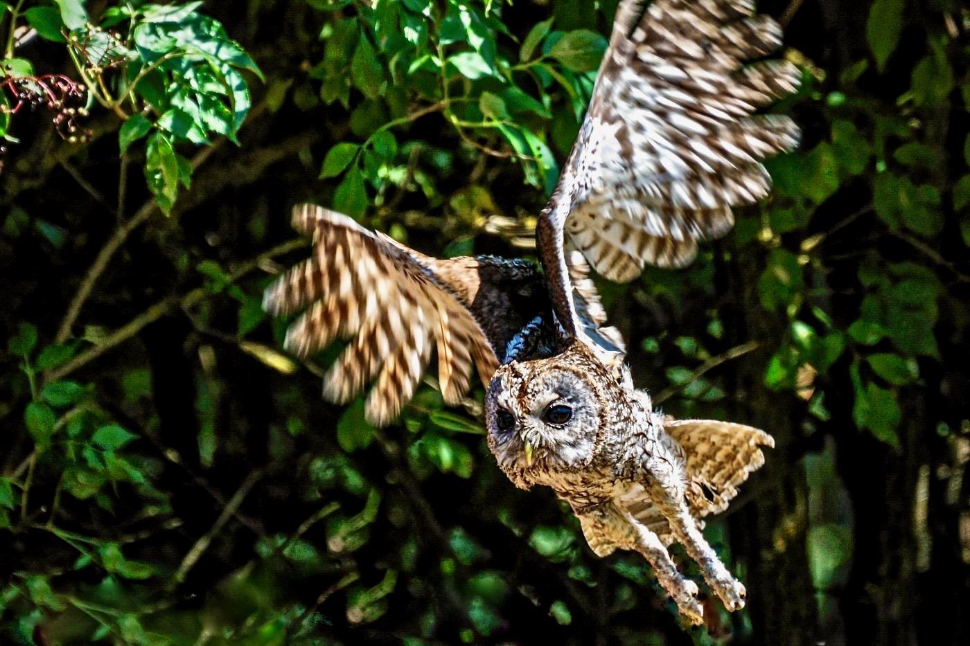 Biodiversité : Chouette, on va observer des rapaces nocturnes !