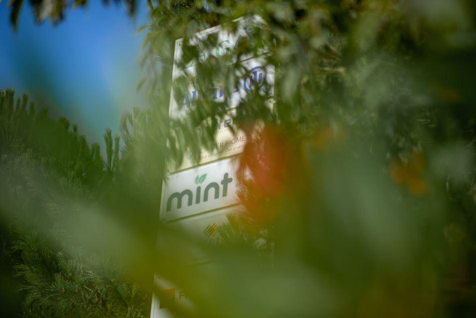Économie : Avec «Mint», vous avez l'énergie qui passe au vert